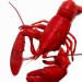 Seafood: Whole Cooked Lobster