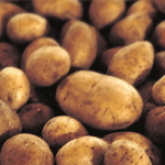 Grocery: Fresh Russet Potatoes