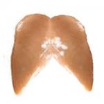 Chicken: IQF Boneless Skinless Chicken Breasts